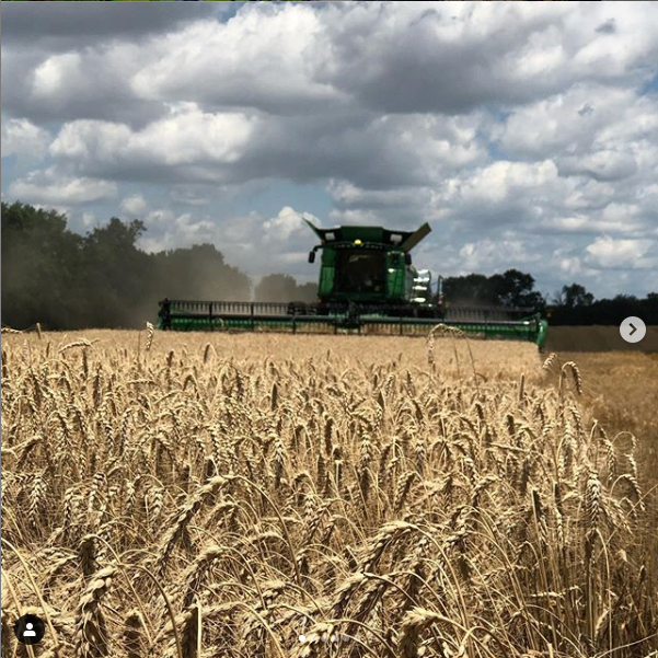 Field at harvest