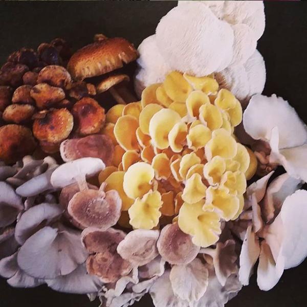 mushroom bouquet