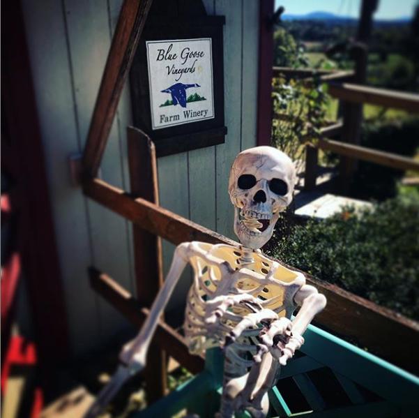 pic of skeleton at vineyard