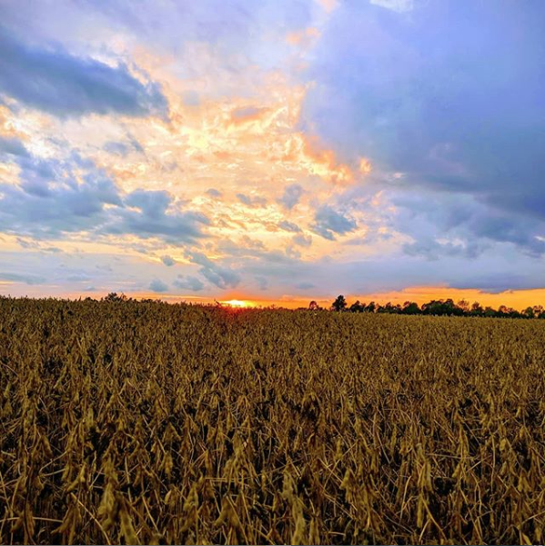 Pic of sunset over field