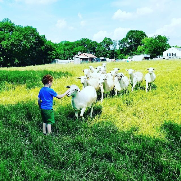 Pic of boy with sheep