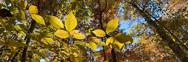 Photo of tree leaves