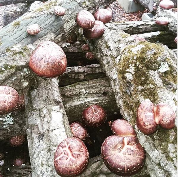 Instagram photo of mushrooms