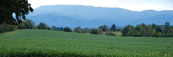 TN landscape