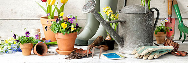 Gardening tools and potted plants